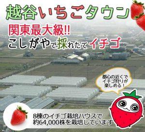 ichigogari-bannertop